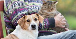 L'assurance pour les chiens et les chats